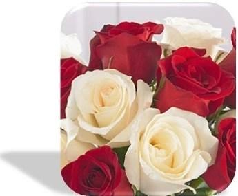 31.- rosas blancas y encarnadas