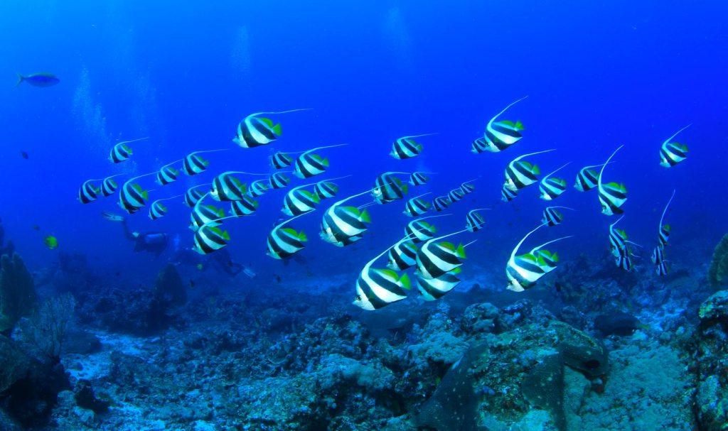 Belize Liveaboards