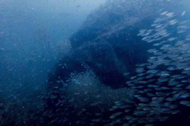 和歌山・串本魚群