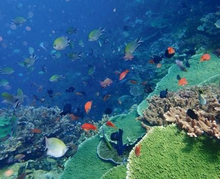 産後初の復帰ダイビング「コモド、サメとマンタと群れ群れお魚天国」