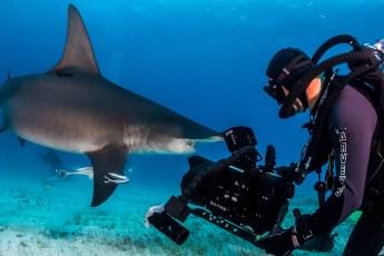 Jonathan Bird on a Blue World film shoot. Photo © Jonathan Bird's Blue World