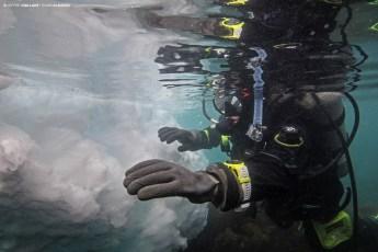 Françoise Gervais diving off the village of Ilimanaq in Disko Bay, Greenland. Photo © Jeffrey Gallant   Diving Almanac