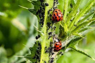 Top 10 Pest Control Tips