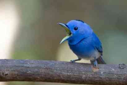 Twitter tweet blue bird passaro azul