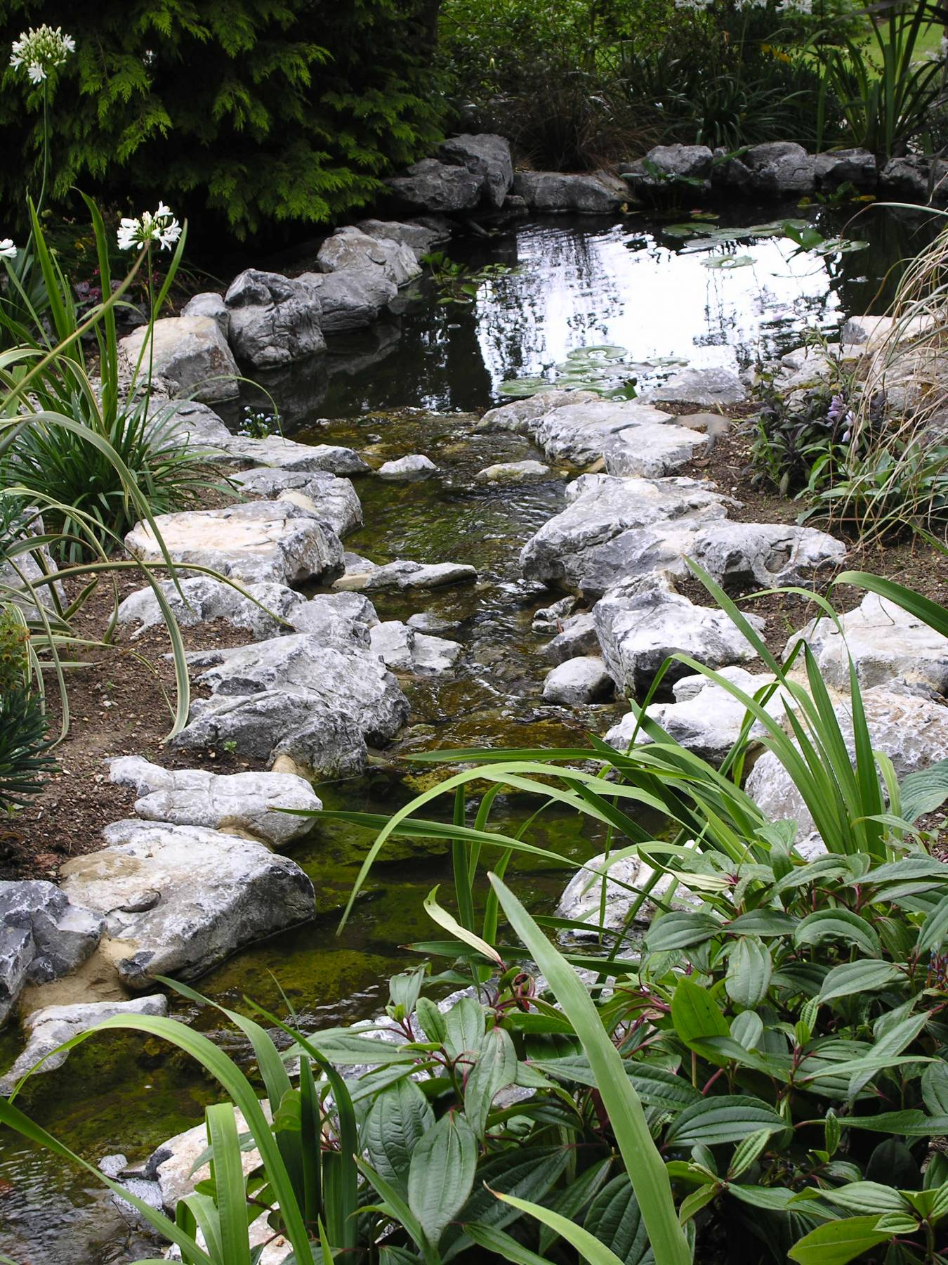 A natural pond and stream