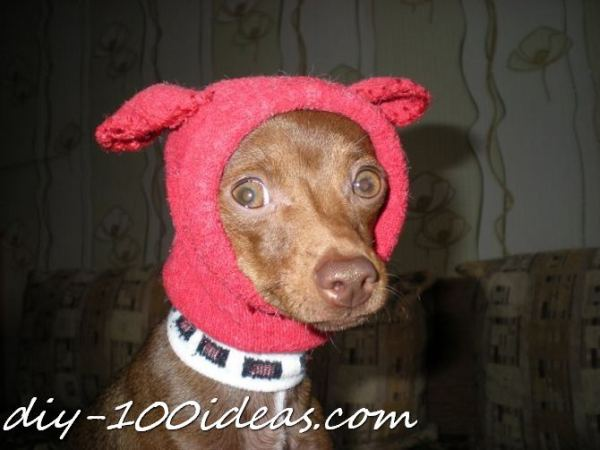 Dog hat from sock (1)