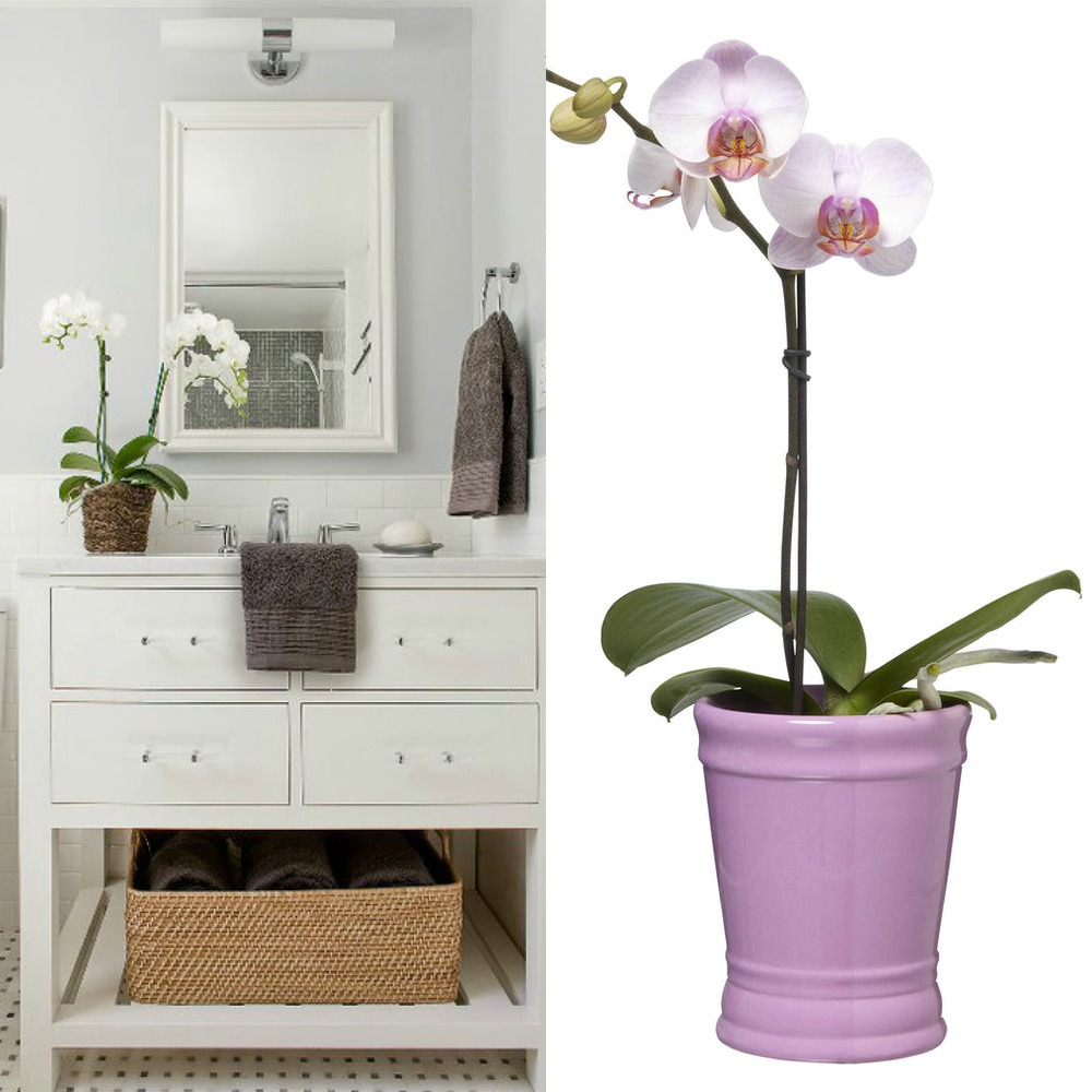 bathroom home decor orchids