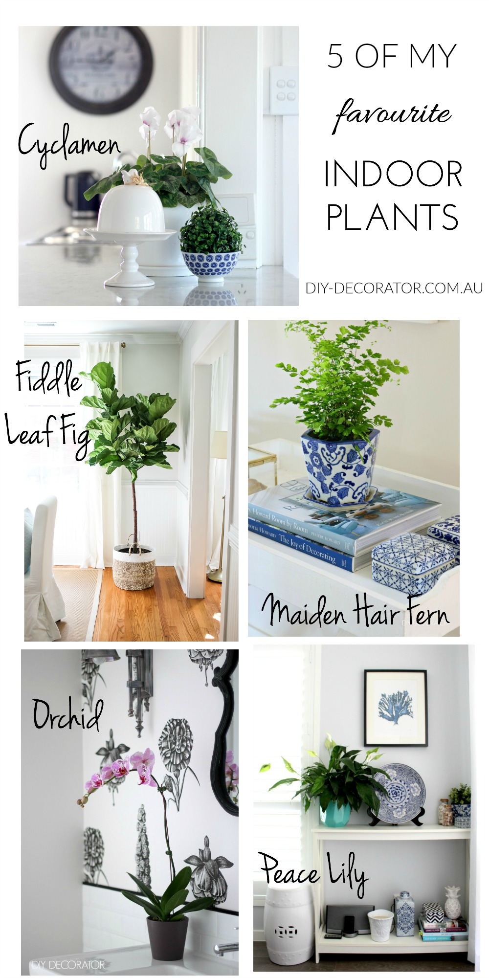 Favourite Indoor Plants