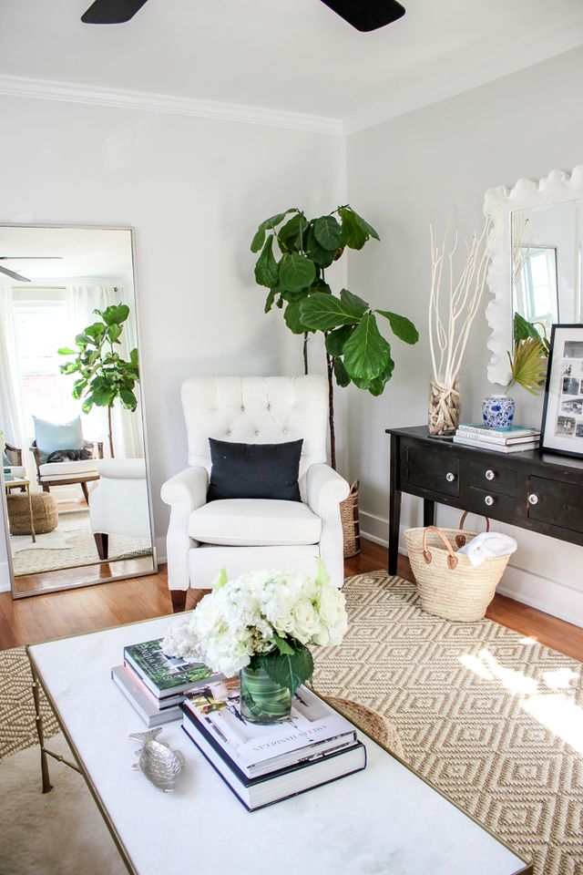 Favourite Indoor Plants Fiddle Leaf Fig