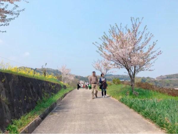 しまばら火張山花公園の春の花まつりに入るよ