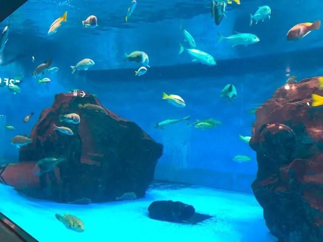ペンギン水族館の魚たち