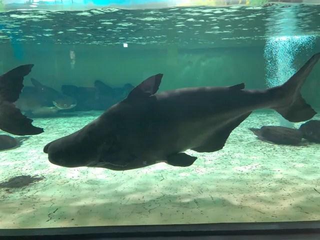 国内最大級の淡水魚プラー・ブック