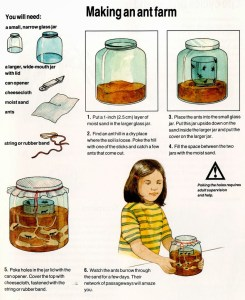 How To Make An Ant Farm for kids? – fun projects for kids at home