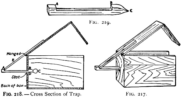 217-how-to-make-a-squirrel-trap