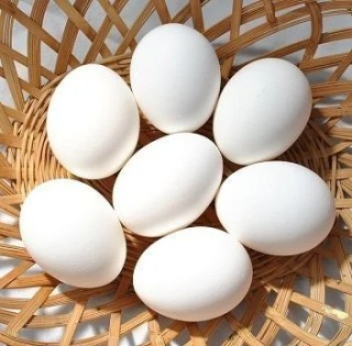 Fitness as you age - eggs