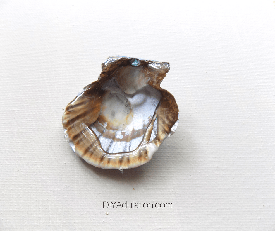 Glue on the back of a seashell