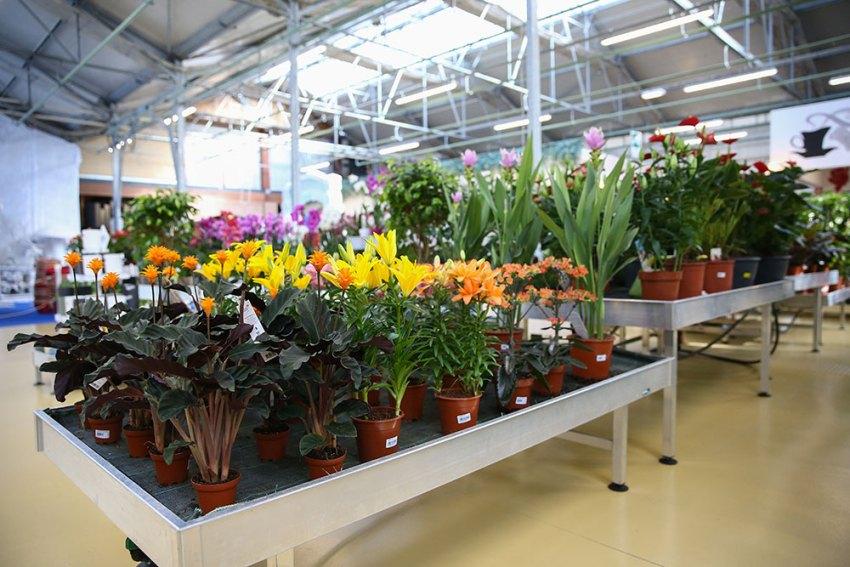 Il garden center Mondo Verde