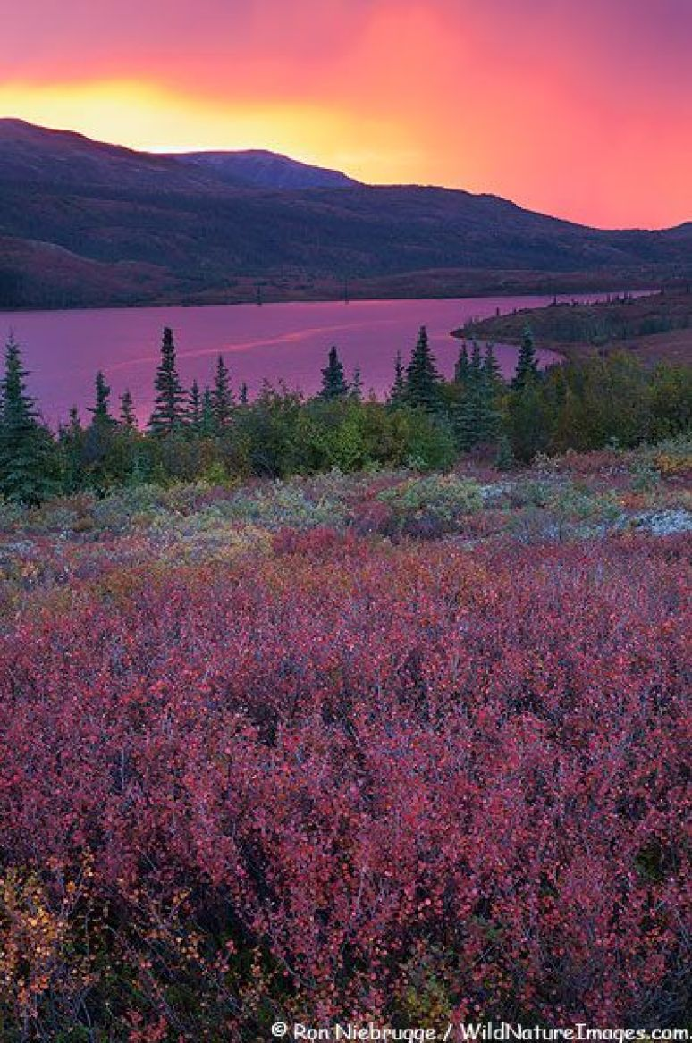 Alaska Wonder Lake Pictures Denali National Park