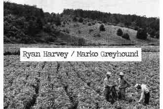 ryan-harvey-marko-greyhound