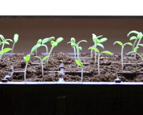 Diy Growing Plants Effortless Step By Step Way To Grow
