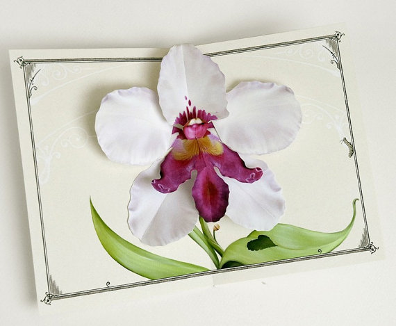 Orchid Pop Up Card – White Dragon Flower for birthday, get well, home decor, mother, grandmother, aunt, female, graduate, congratulations by crankbunny