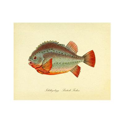 Vintage Fish Print Series 1 Plate 2 Digital Download: 8×10, specimen, fishes, vintage-look, printing and framing, decoupage by RhineandStone