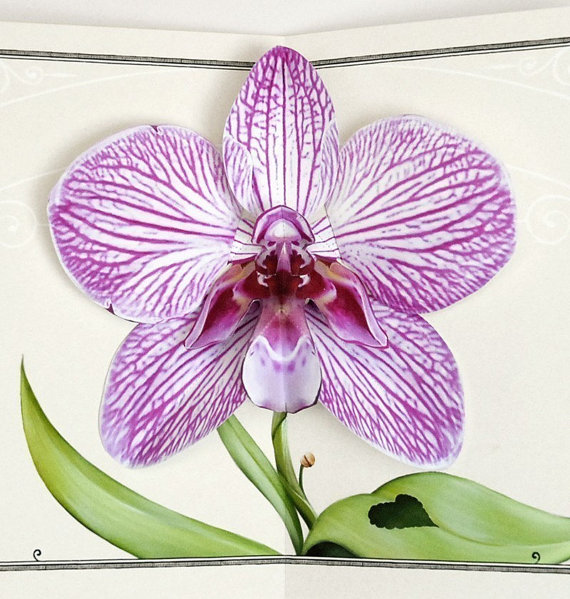 Orchid Pop Up Card – Purple Zebra Flower for birthday, anniversary, congratulations and thinking of you special gift occasions by crankbunny