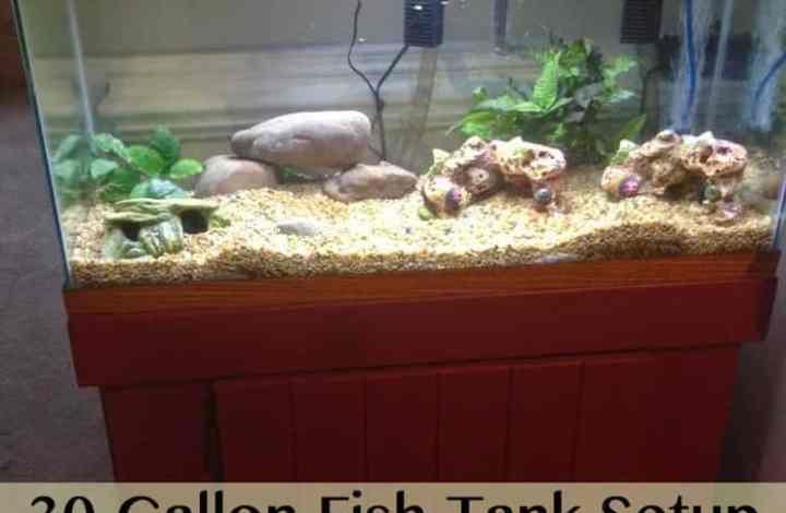 30 Gallon Fish Tank Setup
