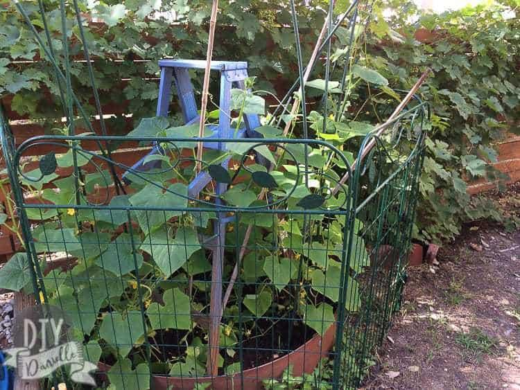 Blue ladder in the garden.