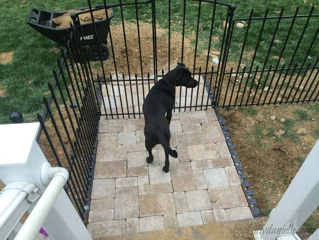 DIY dog run. Dog standing at the gate. This easy dog run is easy to install- no digging holes for posts.