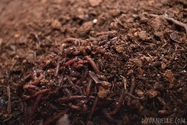 Learn about Worm Composting