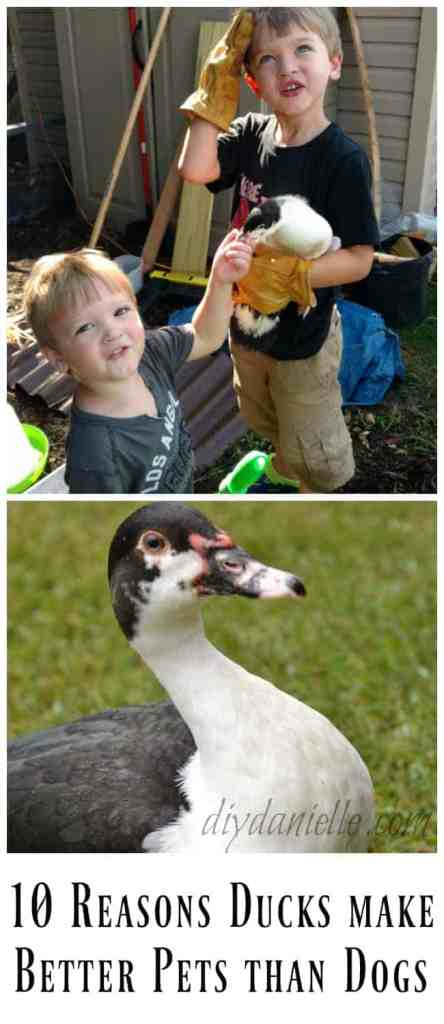 10 Reasons Ducks Can Make Better Pets Than Dogs