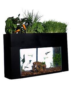 Aquaponics setups make a great gift.