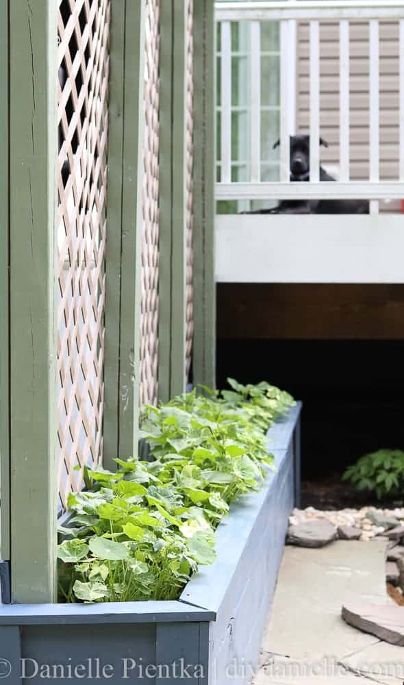Simple privacy planters with a trellis.
