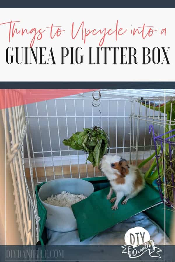 Items you can upcycle into a guinea pig litter box. Several free or cheap litter boxes and how to get your guinea pig to use it.