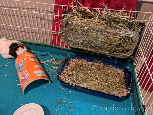 Upcycled items in a guinea pig cage, including a casserole dish for a litter box.