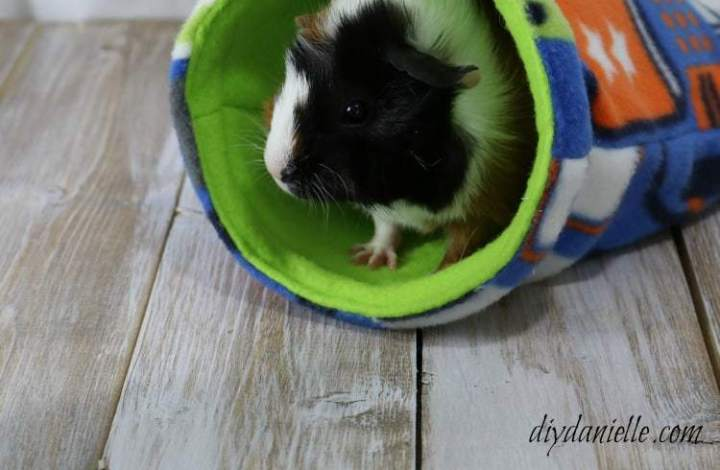 How to Care for Your Guinea Pigs