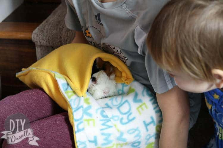 Guinea pig lap blanket with our female cavy inside and my sons holding her.