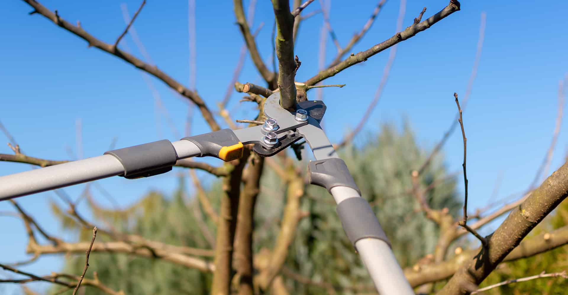 5 Best Tree Loppers For Tough Branches 2019 Garden