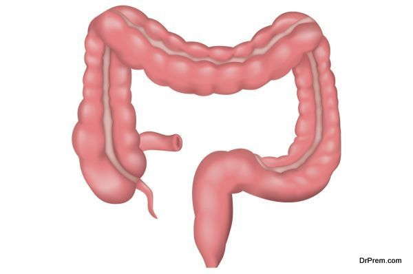 intestine-health