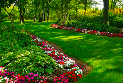 Landscaping Plants for Shade Ideas Designs Pictures on Tree Planting Ideas For Backyard id=92824