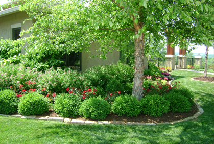 Best Types of Trees for Landscaping Front & Backyard on Backyard Landscaping Ideas With Trees id=69315