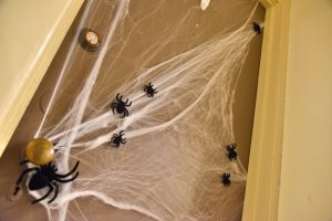 Budget Spiders