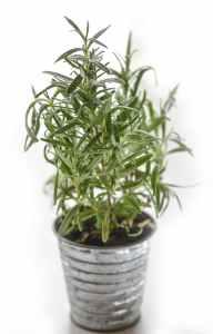 yard plant
