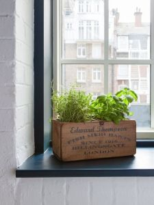 windowsill herb garden