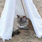 DIY Pet Teepee
