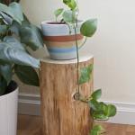 Log Plant Stand
