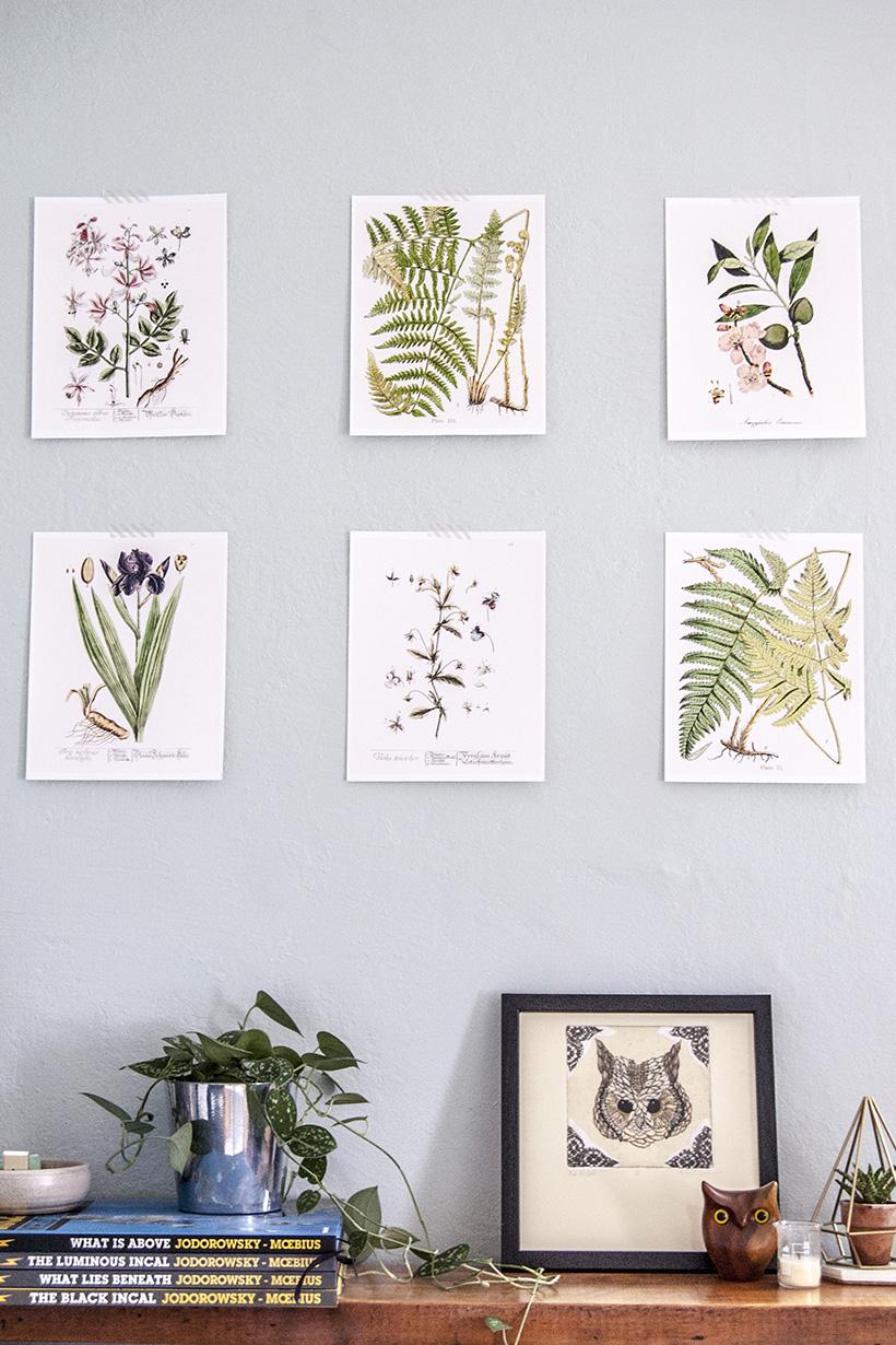 picture regarding Free Vintage Printable titled Totally free Printable Typical Botanical Artwork -