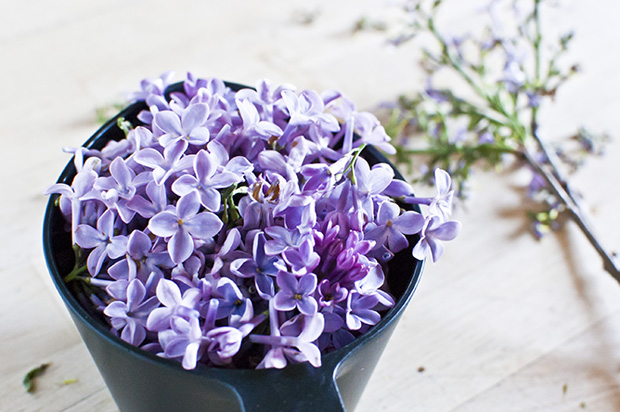 lilac floral spring flowers cocktail recipe