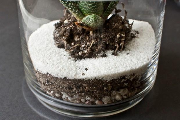 DIY striped terrarium